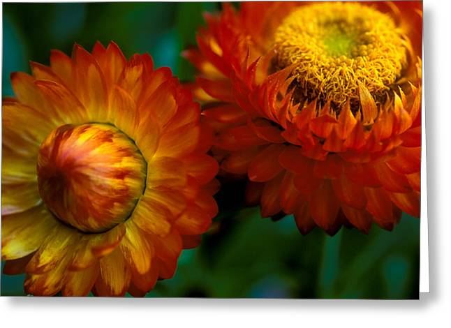 Autumn Prints Greeting Cards - Colors of Fall Greeting Card by Kathy Yates