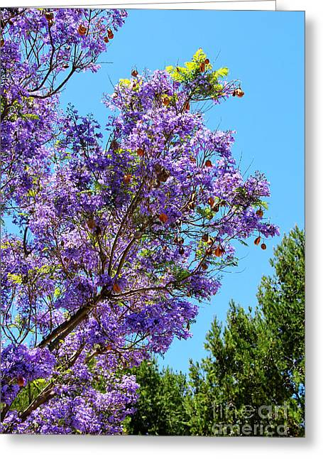 Colors Of Spring Greeting Card by Mariola Bitner
