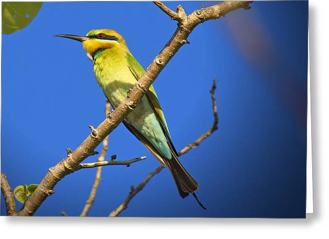 Top-end Greeting Cards - Colors of the Rainbow Greeting Card by Douglas Barnard