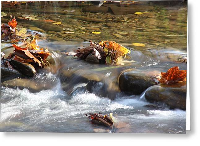 Ewing Greeting Cards - Colors On The Stream Greeting Card by Christopher Ewing