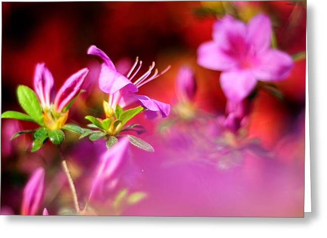 Colors Greeting Card by Rebecca Sherman