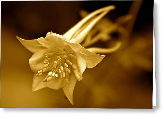 Columbine Greeting Cards - Columbine in Sepia  Greeting Card by Angie Wingerd