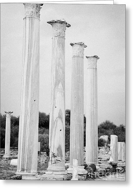 Ammochostos Greeting Cards - Columns In The Central Courtyard And Stoa Gymnasium And Baths In The Ancient Site Of Salamis Greeting Card by Joe Fox