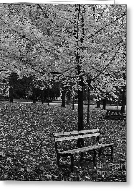 Park Benches Drawings Greeting Cards - Come and sit with me a while Greeting Card by Diane E Berry