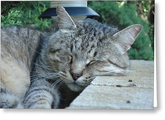 Cat Sleeping Greeting Cards - Comfortable Greeting Card by DB Artist