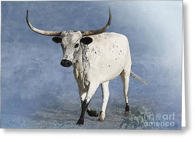 Texas Longhorn Cow Greeting Cards - Coming Home Greeting Card by Betty LaRue