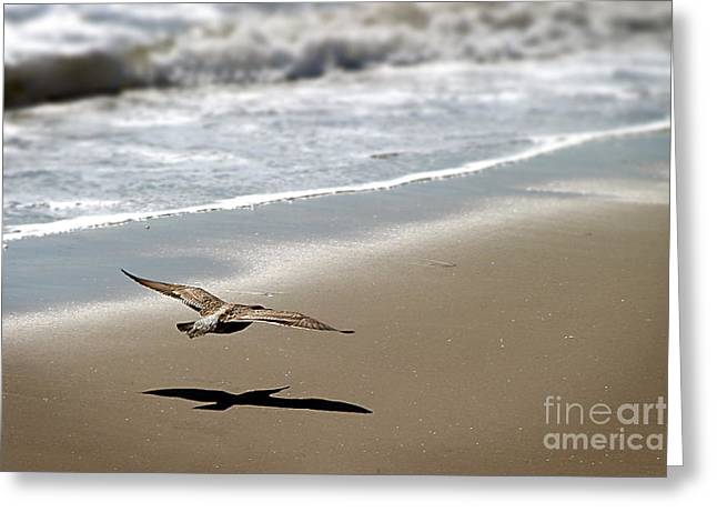 Flying Seagull Greeting Cards - Coming In For Landing Greeting Card by Henrik Lehnerer