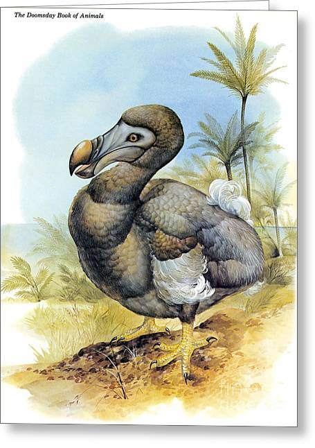 Dodo Greeting Cards - Common Dodo Greeting Card by Photo Researchers