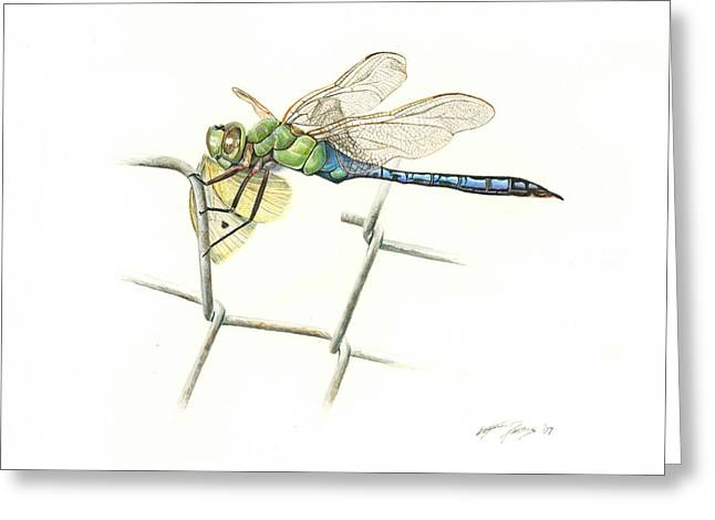 Creature Eating Greeting Cards - Common Green Darner Greeting Card by Logan Parsons