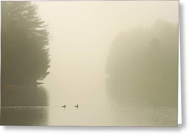 Common Mergansers In Morning Fog Greeting Card by John Burk