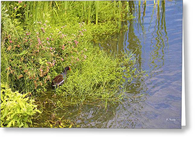 Secretive Birds Greeting Cards - Common Moorhen At The Waters Edge Greeting Card by Roena King