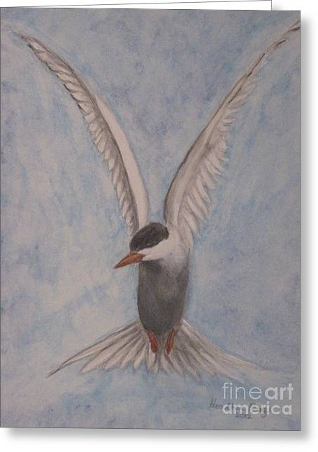 Tern Mixed Media Greeting Cards - Common Tern in Flight Greeting Card by Heather Perez