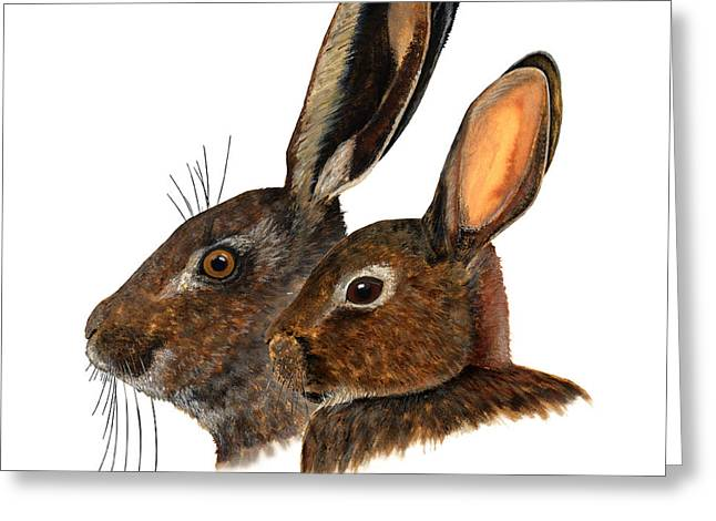 Nature Study Drawings Greeting Cards - Comparison hare rabbit ears - Oryctolagus cuniculus - Genus lepus - Vergleich Hase Kaninchen Ohren Greeting Card by Urft Valley Art