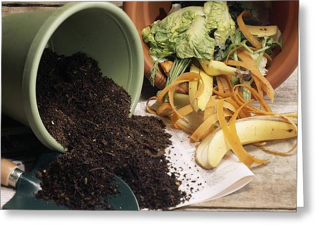 Compost Greeting Cards - Compost Greeting Card by Sheila Terry