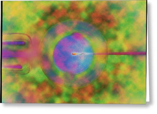 In Vitro Greeting Cards - Computer Artwork Of Ivf: Egg Injected With Sperm Greeting Card by Mehau Kulyk