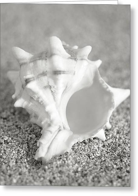 Aquatic Greeting Cards - Conch on Beach Greeting Card by Mary Van de Ven - Printscapes