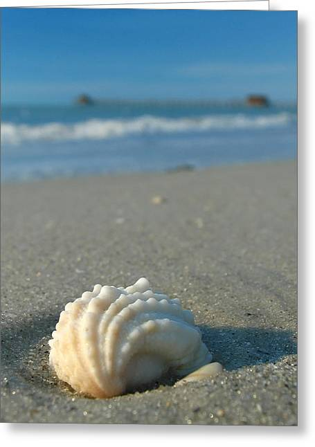 Sea Shell Art Greeting Cards - Conch Shell Greeting Card by Juergen Roth