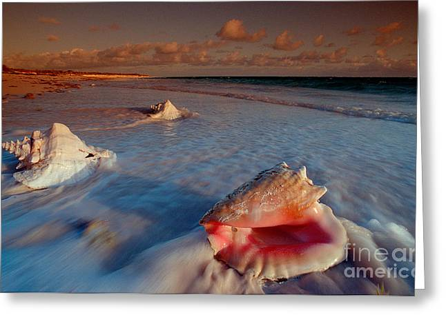 Conch Shell on Beach Greeting Card by Novastock and Photo Researchers
