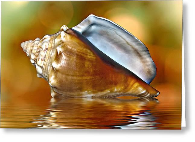 Ocean. Reflection Digital Art Greeting Cards - Conch Greeting Card by Steve Harrington