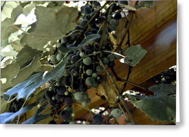 Concord Grapes Greeting Cards - Concord Grapes Greeting Card by Heather Grow