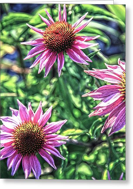 Abstracted Coneflowers Greeting Cards - Coneflower Art Greeting Card by Steve McKinzie