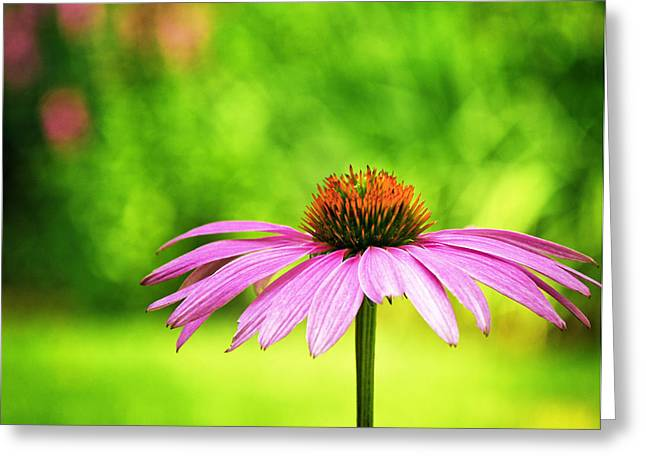 Babylon Greeting Cards - Coneflower in Pink and Green Greeting Card by Vicki Jauron