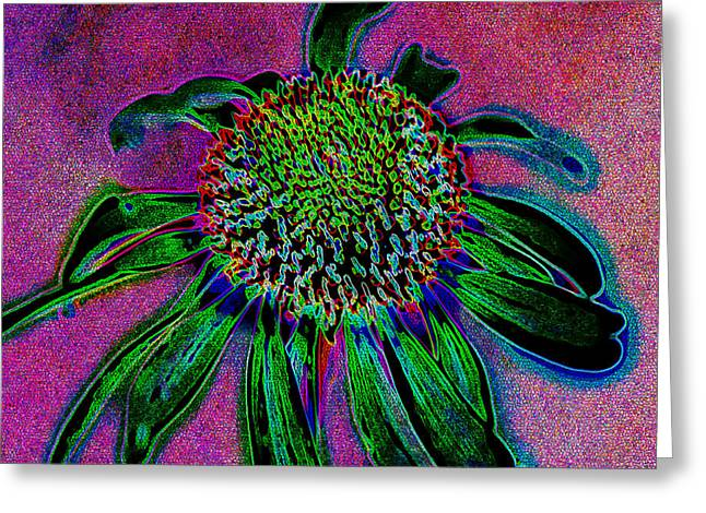 Coneflower Greeting Card by Simone Hester