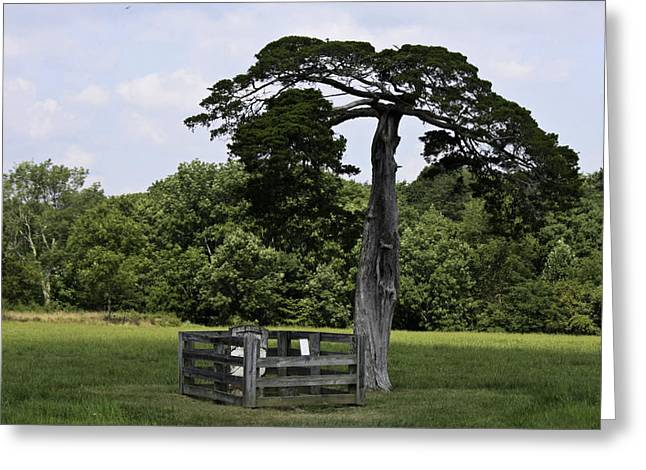Richmond-lynchburg Stage Road Greeting Cards - Confederate Grave of Lafayette Meeks Appomattox Virginia Greeting Card by Teresa Mucha