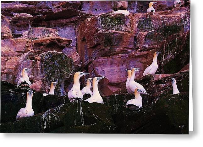 Bird Congregation Greeting Cards - Congregation Greeting Card by HweeYen Ong
