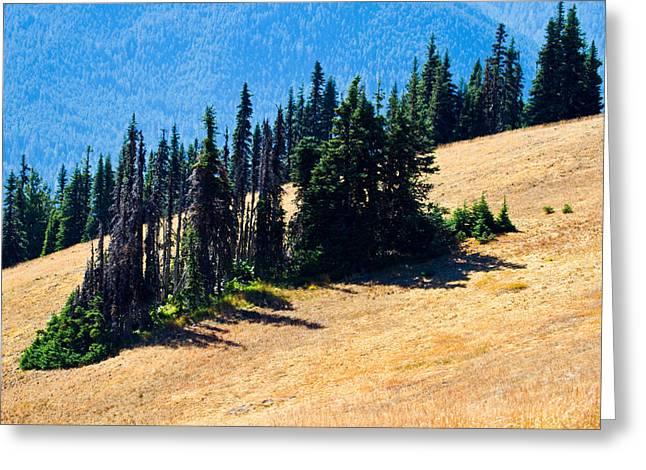Pacific Northwest Greeting Cards - Conifer Clusters Greeting Card by Marie Jamieson