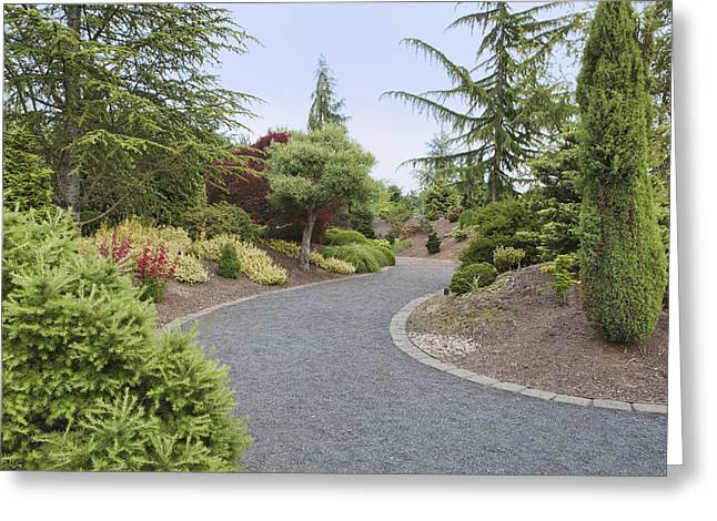 State Parks In Oregon Greeting Cards - Conifer Garden In The Oregon Gardens An Greeting Card by Douglas Orton
