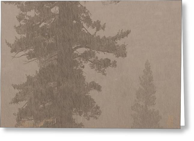 Foggy Day Greeting Cards - Conifer Trees On A Foggy, Snowing Greeting Card by Phil Schermeister