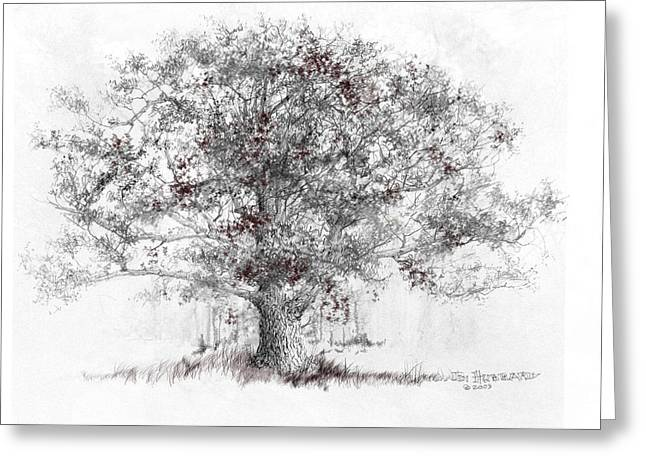 Jim Hubbard Greeting Cards - Connecticut - White Oak Greeting Card by Jim Hubbard