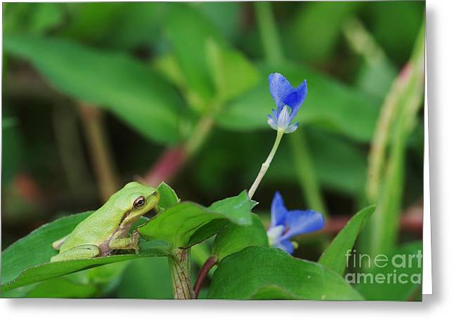 Contemplating Blue Greeting Card by Don Youngclaus