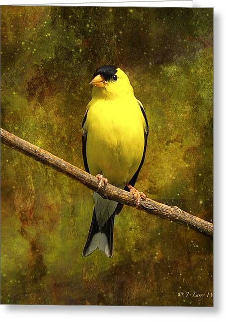 J Larry Walker Greeting Cards - Contemplating Goldfinch Greeting Card by J Larry Walker