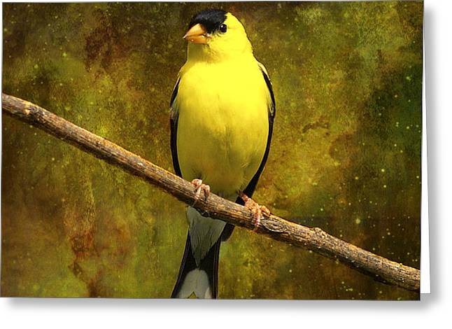 Contemplating Goldfinch Greeting Card by J Larry Walker