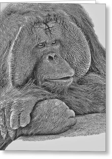 Orangutan Digital Art Greeting Cards - Contemplation Greeting Card by Larry Linton