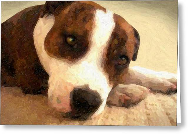 Bull Terrier Greeting Cards - Contentment Greeting Card by Michael Tompsett