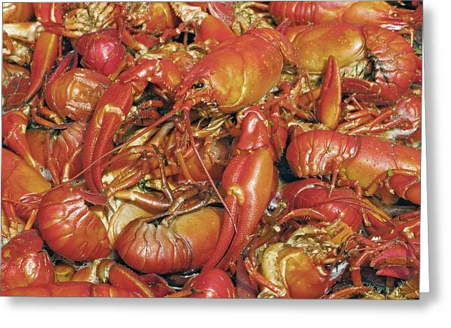 Boiled Crawfish Greeting Cards - Cooked Crayfish Greeting Card by Bjorn Svensson