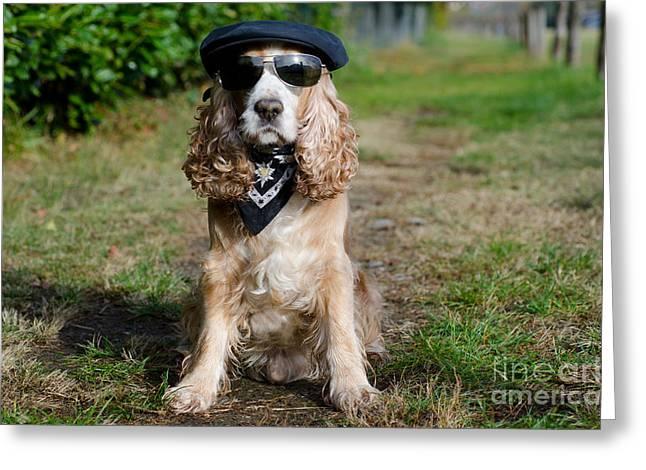 Spaniel Greeting Cards - Cool dog Greeting Card by Mats Silvan