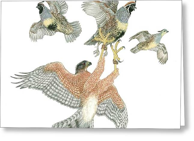 Cooper's Hawk and Gambels Quail Greeting Card by Tim McCarthy
