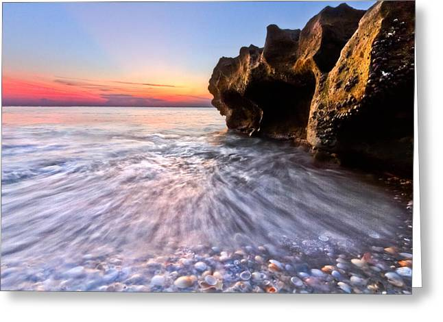 Martin County Greeting Cards - Coquillage Greeting Card by Debra and Dave Vanderlaan