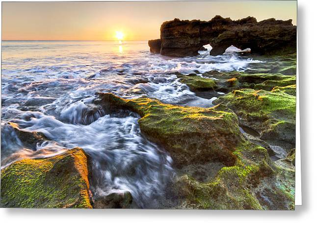 Tidal Photographs Greeting Cards - Coral Cascades Greeting Card by Debra and Dave Vanderlaan