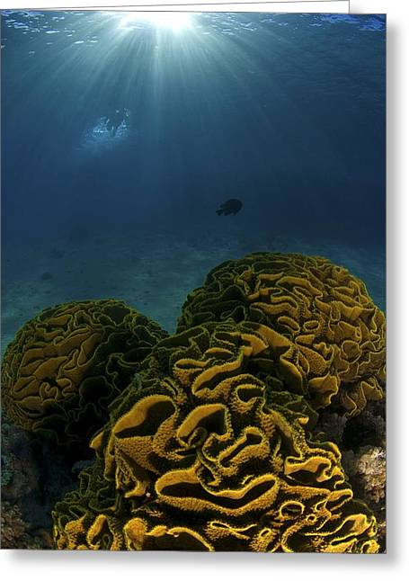 Aquatic Greeting Cards - Coral Reef, Red Sea Greeting Card by Photostock-israel