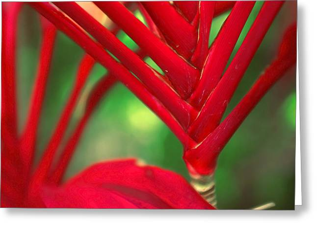 Cordylines Greeting Cards - Cordyline Greeting Card by Tammy McKinley