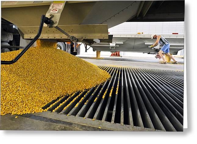 Grate Greeting Cards - Corn At An Ethanol Processing Plant Greeting Card by David Nunuk