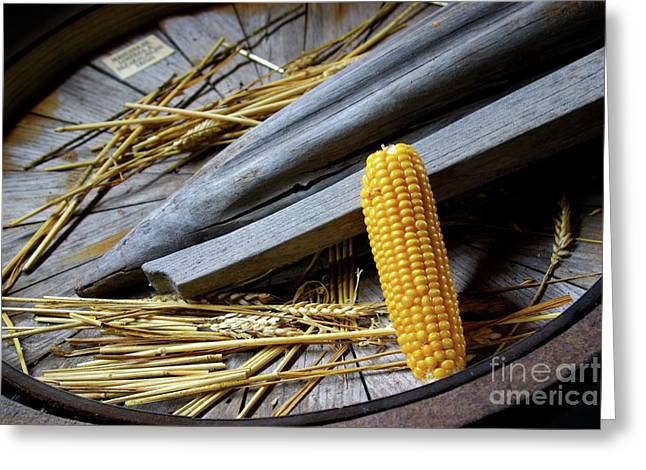 Corn Meal Greeting Cards - Corn Cob Greeting Card by Carlos Caetano