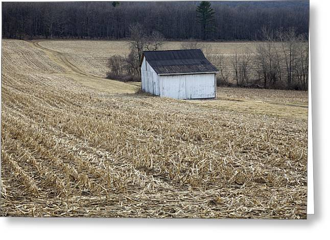 Tin Roof Greeting Cards - Corn Field Barn Greeting Card by John Stephens