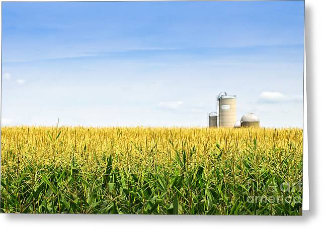 Corn Greeting Cards - Corn field with silos Greeting Card by Elena Elisseeva