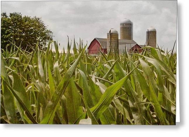Cornfield Greeting Cards - Corn Is High Greeting Card by Odd Jeppesen